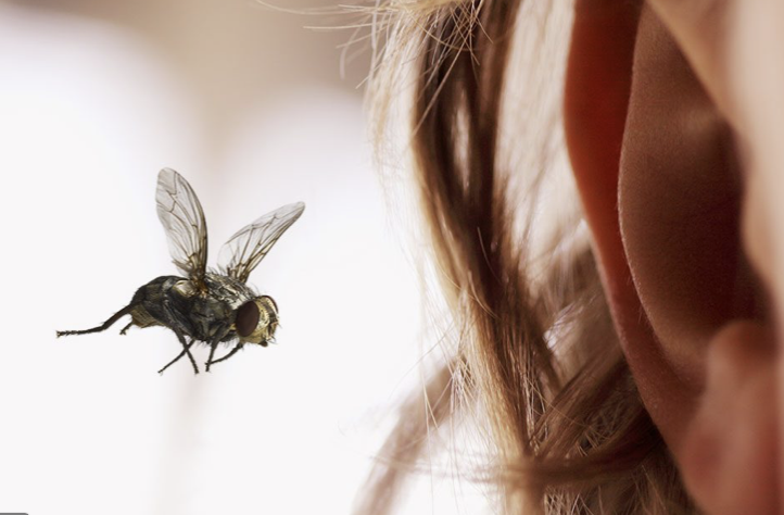 BEST OF THE BEES IN YOUR EARS